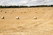 Round straw bales in field of stubble after harvest, summer landscape near Rudge, Marlborough, Wiltshire, England, UK