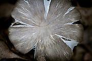 Aged Mushroom