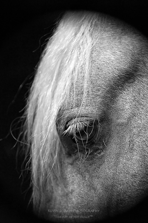 He was one of about 25 specimens at the McCulloch Morgan Horse Farm in Old Lyme, CT.  The owner, Mary Jean Vasiloff, gave us a personal tour and then encouraged us to explore on our own. I came across this fellow anxious to begin his portrait session. He even took the liberty of arranging for some nice lighting. <br /> <br /> He must have felt this was his best side, because it was the only perspective he would allow.