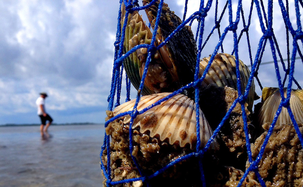 Scalloping at low tide near the quaint town of Cedar Key.
