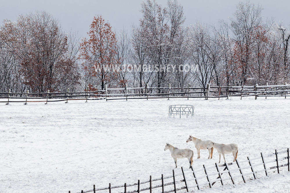 Campbell Hall, New York - Horses stand in a farm field at Twin View Stables after a snowstorm on Nov. 20, 2016.
