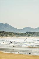 Gaivotas na Praia da Barra da Lagoa. Florianópolis, Santa Catarina, Brasil. / Seagulls at Barra da Lagoa Beach. Florianopolis, Santa Catarina, Brazil.