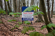 Auctioneer's sign announcing an upcoming woodland sale by auction for private land in north Somerset.