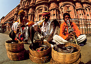 Snake charmers with their cobras, Palace of the Winds, Jaipur, Rajasthan, India