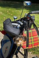 SPAARNWOUDE - Hond mee op de golfbaan. Beoefenen van de golfsport. COPYRIGHT KOEN SUYK