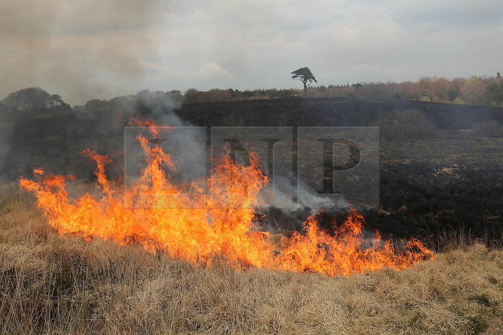 © Licensed to London News Pictures. 21/04/2014. Wells, UK Fire officers deal with a heath fire at Priddy Ponds near Wells in Somerset a popular beauty spot on the Mendip Hills. . Photo credit : Jason Bryant/LNP