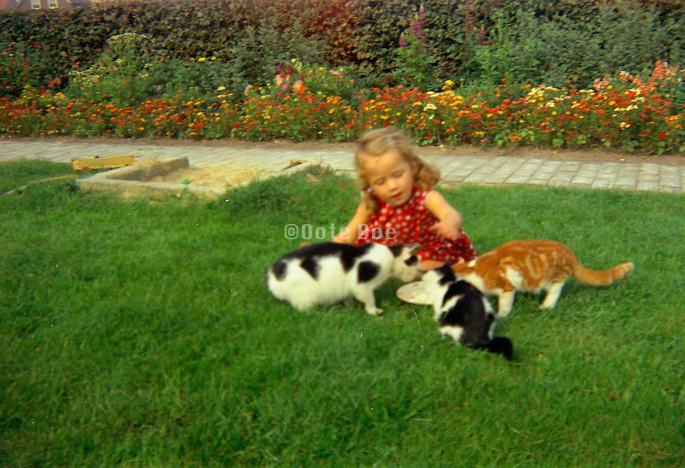 Young girl playing with the cats while they try to eat