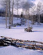 Aspen, Aspen Trees, Aspen Tree, Aspen Grove, Trees, Tree, Snow, Winter, Log Fence, Fence, Wooden Fence, Clouds, Light, Sky, Sun, Utah