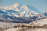 An early season snow dusts Denali mountain, also known as Mt McKinley in Denali National Park, McKinley Park, Alaska.