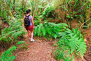 Hiker on the lush Po'omau Canyon Ditch Trail, Kokee State Park, Island of Kauai, Hawaii