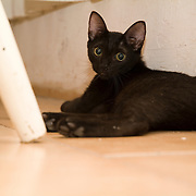 Black cat at home.Cancun, Mexico.