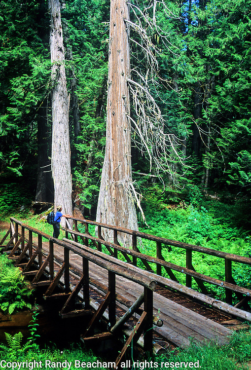 Hiker on footbridge across Cedar Creek at Cedar Grove Camp, Lewis and Clark site in the Bitterroot Mountains. Lewis and Clark National Historic Trail, Clearwater National Forest, Idaho