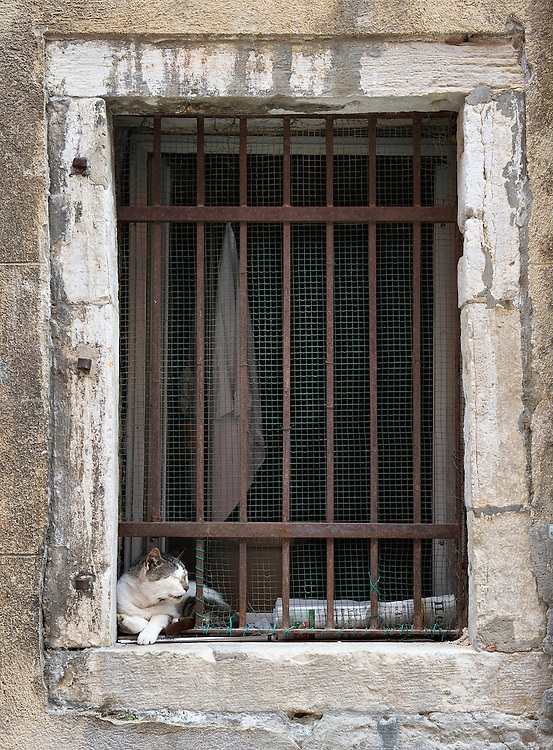 VENICE, ITALY - AUGUST 27:  A stray rest on a windowsill of an old basement converted into cats shelter on August 27, 2011 in Venice, Italy. Dingo is the Anglo-Venetian association part of the AISPA,  founded in 1965 by Helen Saunders and Elena Scapabolla and is devoted to the welfare of venetian stray cats. Cats in Venice