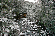 snow forest of snow trees alongside snow rock in the still flowing river, tongariro national park, new zealand