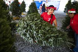 November 21, 2018 - Guaynabo, Puerto Rico - Guaynabo, Cataño, Bayamón - Noviembre 21, 2018 - PR HOY - FOTOS para ilustrar una historia sobre la venta de árboles de Navidad. El año pasado por el paso del huracán María escaseaban los árboles o no era de la mejor calidad. EN LA FOTO una vista de la venta en la carpa de árboles que está cerca del Centro de Bellas Artes de Guaynabo..FOTO POR:  tonito.zayas@gfrmedia.com.Ramon '' Tonito '' Zayas / GFR Media (Credit Image: © El Nuevo Dias via ZUMA Press)