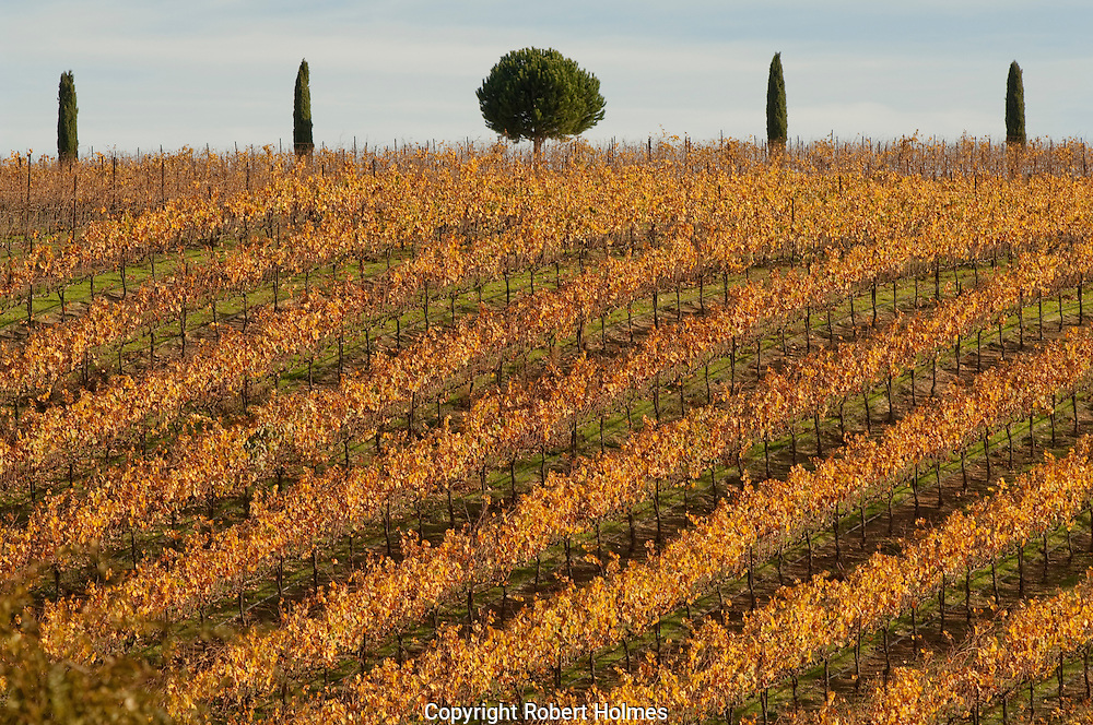 Vineyards in Carneros, Sonoma Coutny, California