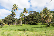 Cook islands, New Zealand, Rain forest