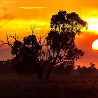 Sunrise light in farmland near Corowa, NSW