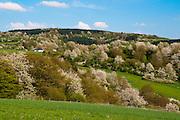 Landschaft Frühling bei Wadern, Saarland, Deutschland
