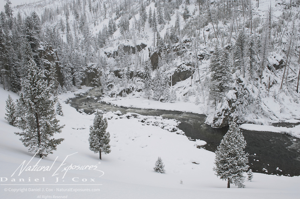 The Firehole River flows through a snow-covered landscape in Yellowstone National Park. Wyoming.
