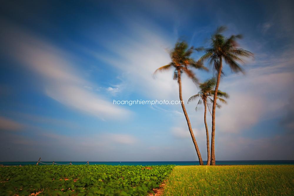Vietnam Images-Seascape-tree-Ly Son island-Quang Ngai phong cảnh việt nam hoàng thế nhiệm
