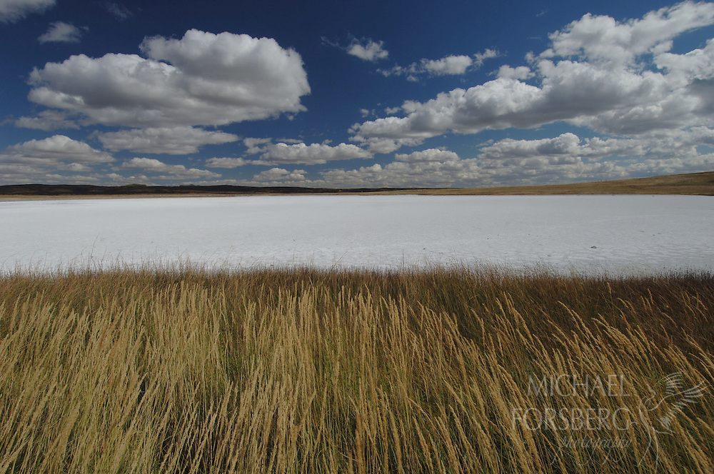 In summer, as saline pothole wetlands dry up, their soils gleam white from the high salt content.  When wet, they provide critical habitat for prairie shorebird species like piping plovers, American avocets, and killdeer.  Lostwood National Wildlife Refuge, North Dakota.