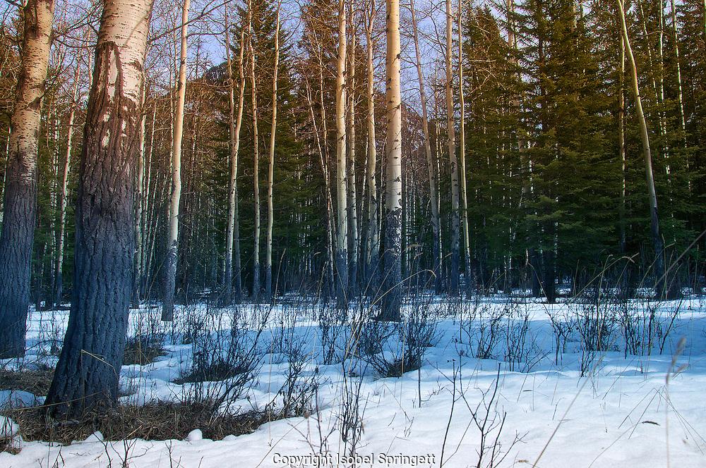 Banff, Alberta., Courtenay, British Columbia, canada,