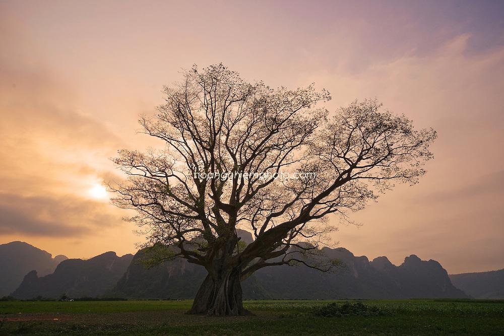 Vietnam Images- landscape-Tree-Quảng Bình phong cảnh việt nam -Hoàng thế Nhiệm