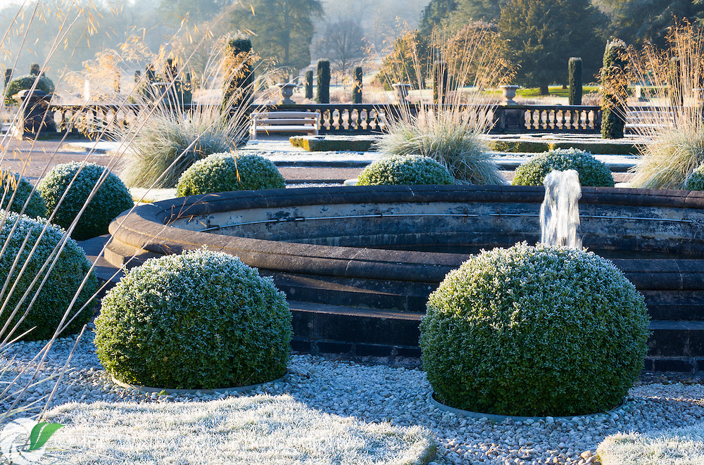 Box balls and grass in the Upper Flower Garden at Trentham Gardens, Staffordshire, covered in a heavy frost on a January morning