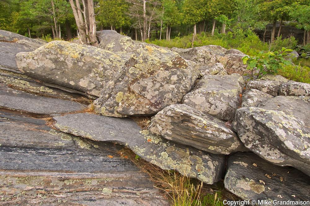 Trees and rock along Georgian Bay (Lake Huron)<br />Killbear Provincial Park<br />Ontario<br />Canada