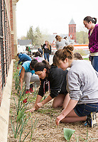 "Samantha Silva and Marissa McDermott pull weeds from the Laconia High School front gardens with the senior class during Saturday's ""clean up"" day.  (Karen Bobotas/for the Laconia Daily Sun)"