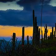 Cactus at Hierve el Agua Oaxaca Mexico.