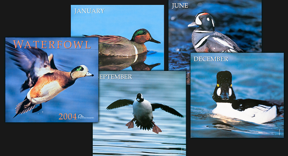 Ducks Unlimited 2004 Calendar
