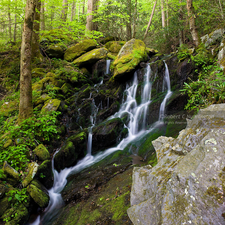 Lush, verdant greens alongside a cascade in the springtime. Great Smoky Mountains National Park, Tennessee, USA