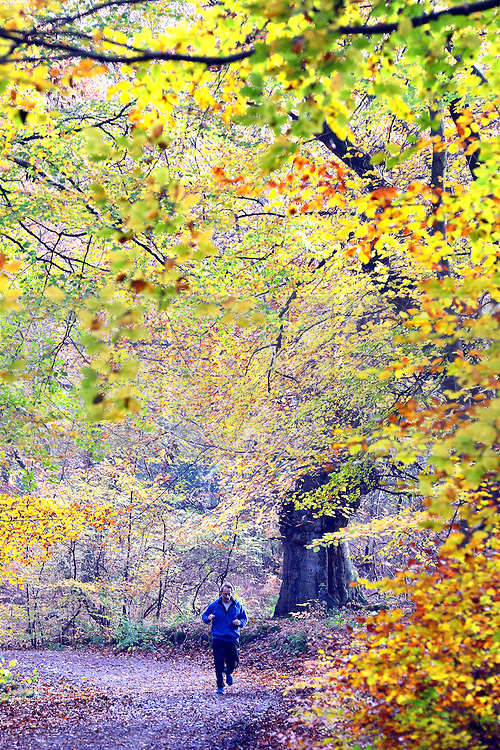 © Licensed to London News Pictures. 13/11/2013. Burnham, UK. A man jogs through the woodland.  Autumn sunshine through the trees at Burnham Beeches, South Buckinghamshire on WEDNESDAY 13TH NOVEMBER. The beeches covering 220 hectares is primarily noted for its ancient beech and oak pollards. Photo credit : Stephen Simpson/LNP