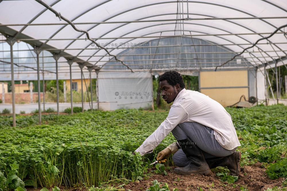 Nettuno, 21/05/2020: Braccianti africani in un'azienda agricola dell'Agro Pontino.<br /> © Andrea Sabbadini