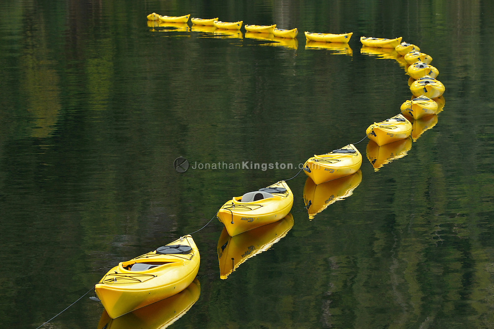 A line of yellow sea kayaks, tethered together, float on green water in Misty Fjords National Monument, Alaska.