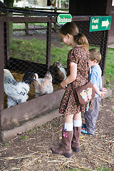 Young girl and boy looking at chickens on a children's outing to a working farm,