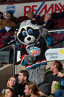 KELOWNA, CANADA - JANUARY 4: Rocky Racoon, the mascot of the Kelowna Rockets stands in the crowd on January 4, 2017 at Prospera Place in Kelowna, British Columbia, Canada.  (Photo by Marissa Baecker/Shoot the Breeze)  *** Local Caption ***