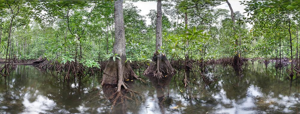 Mangrove Forest on Gam, Raja Ampat - Papua, 360° Panoramic View
