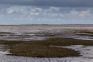Mosselbanken in Oostelijk Waddengebied | Mussel banks in eastern Wadden Sea