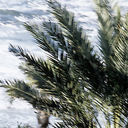 Blured Close Up Palm Tree