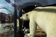 Stufferd Polar Bear<br /> Longyearbyen<br /> Svalbard<br /> Norway<br /> Arctic Ocean