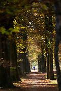 Bij Austerlitz rent een man door het bos op een mooie herfstdag.<br /> <br /> Near Austerlitz a man is jogging in the woods on a nice autumn day.