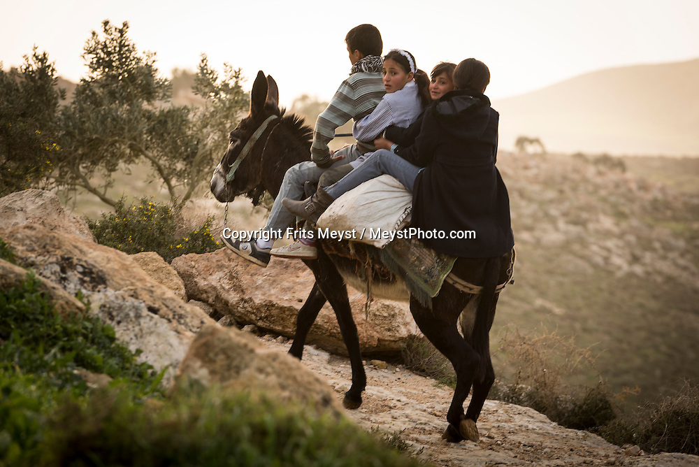 Palestine, March 2015. 4 children ride the donkey to school on the trail between Duma and Kafr Malek. The Abraham Path is a long-distance walking trail across the Middle East which connects the sites visited by the patriarch Abraham. The trail passes through sites of Abrahamic history, varied landscapes, and a myriad of communities of different faiths and cultures, which reflect the rich diversity of the Middle East. Photo by Frits Meyst / MeystPhoto.com for AbrahamPath.org