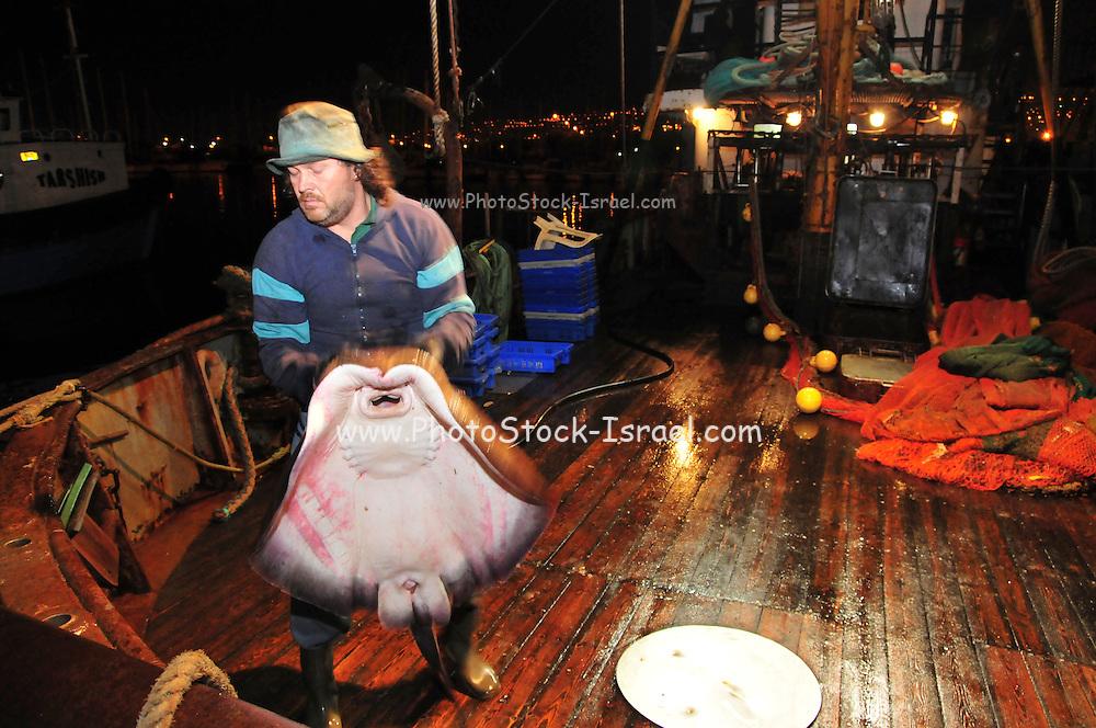 Israel, Haifa Bay, The Kishon Port, used by fishermen and yacht owners,
