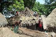 Re doing the roof of a house using palmyrah and coconut palm leaves. Chenthamangalam, Villupuram District, Tamil Nadu.