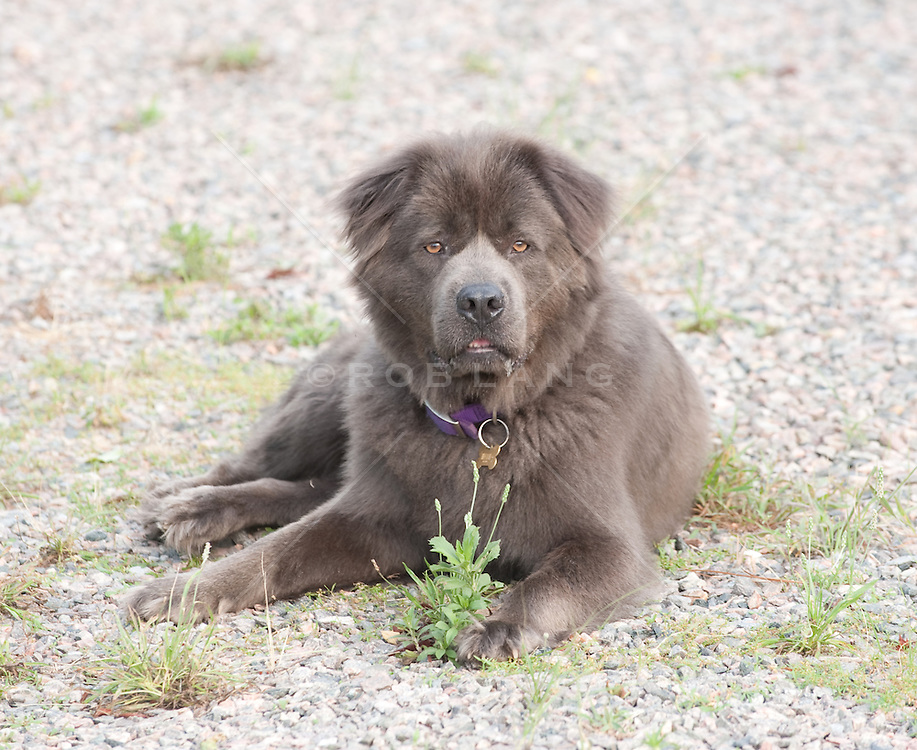 Dog sitting on a gravel road