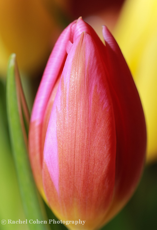 &quot;Other Side of Sunshine&quot;<br />