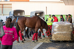 Endurance Team Bahrain<br /> Departure horses from Liege Airport<br /> FEI World Equestrian Games™ Tryon 2018<br /> © Hippo Foto - Dirk Caremans<br /> 02/09/2018
